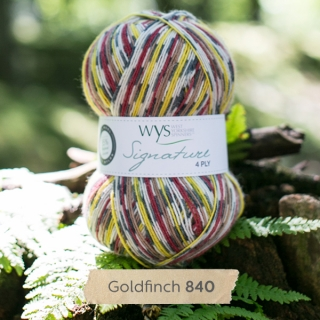 Signature 4Ply Goldfinch